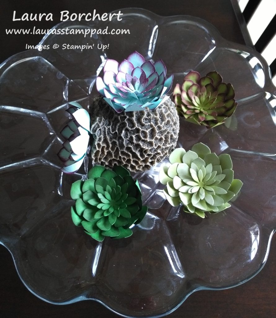 Big Succulents, www.LaurasStampPad.com